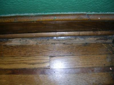 termite20photos20002 - WDI Inspections